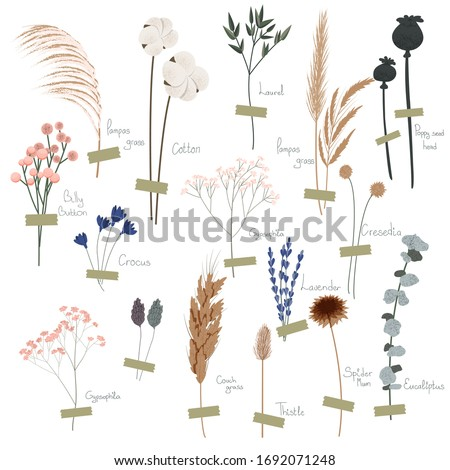 Vector set of boho plants. Beautiful hand drawn wild grass and flowers. Collection of floral elements: pampas grass, poppy heads, lavander, cotton and other. Stylish flat elements for your design Foto stock ©