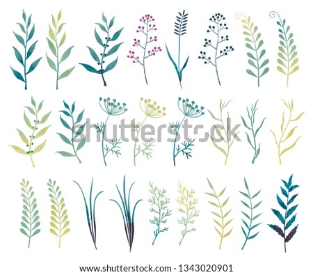 Vector set of branches, leaves, herbs with a watercolor effect. Garden and field plants.