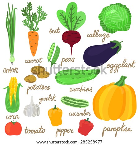 Vector set of bright hand drawing vegetables: onion, carrot, beet, peas, cabbage, eggplant, potato, zucchini, pumpkin, pepper, tomato, corn, garlic, cucumber. Fresh food icons are isolated on white.