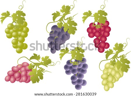 vector set of bunches of grapes