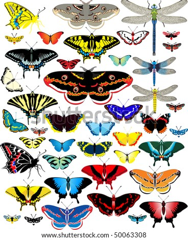 vector set of butterflies and