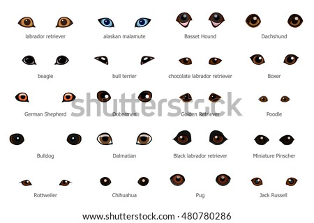 vector set of cartoon dog eyes