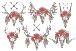 Vector set of cattle animal skulls with tribal arrows, feathers and flower crown or wreath. Antelope, sheep, deer, elk, moose heads. Hand drawn illustration with floral horns in boho, hipster, rustic