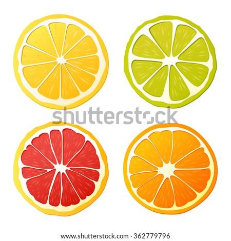 vector set of citrus fruits