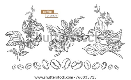 vector set of coffee tree