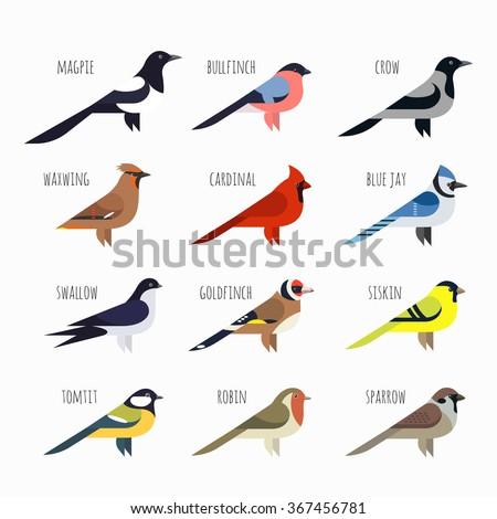 vector set of colorful bird
