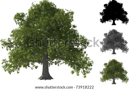 Vector set of Common Oak Trees