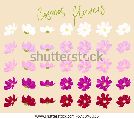 vector set of cosmos flowers of