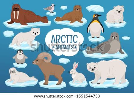 vector set of cute arctic