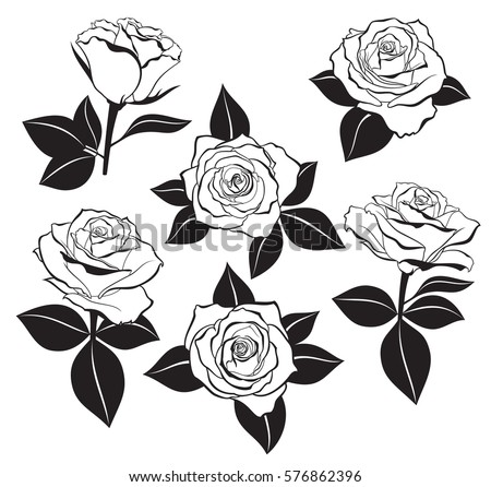 Vector Set Of Detailed Isolated Outline Rose Buds Sketches With Leaves Silhouettes In Black Color