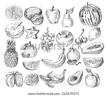 vector set of different hand drawn fruit