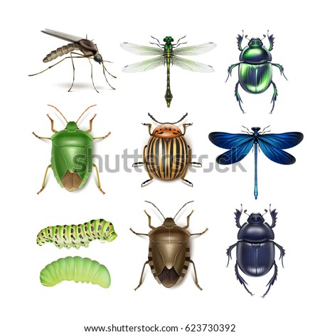 Vector set of different insects gnat, dragonflies, colorado potato beetle, scarabs, green and brown stink bugs, caterpillars top view isolated on white background