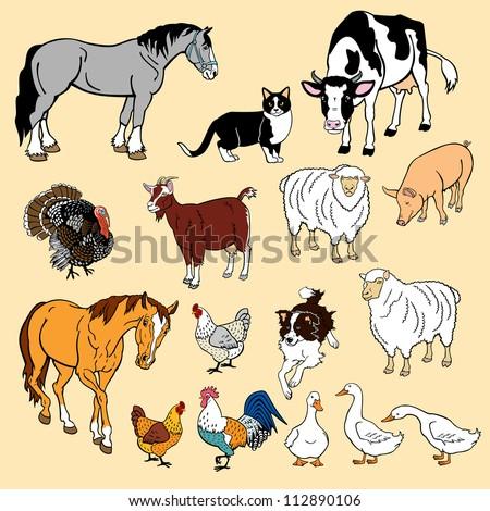 domestic animal