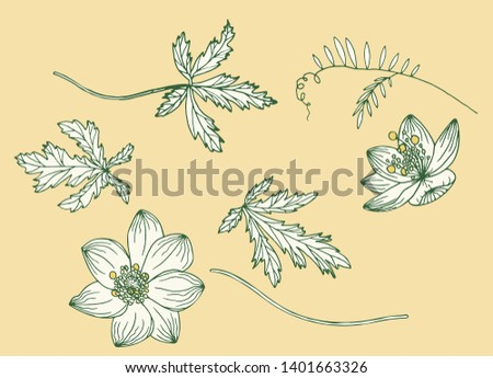 Vector set of doodle floral elements. Flower graphic design. Wild flowers and leaves. Hand drawn vector botany set. Anemone nemorosa and Vicia cracca.