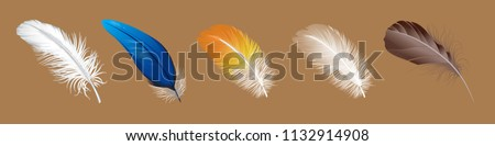 vector set of down, feather, Swan's down, goose feathers, chicken feathers, parrot feathers, plumelet