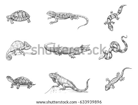 Vector set of exotic pets. Reptiles. Crocodile, chameleon, snakes, turtles, geckos. Isolated hand drawing on white background.