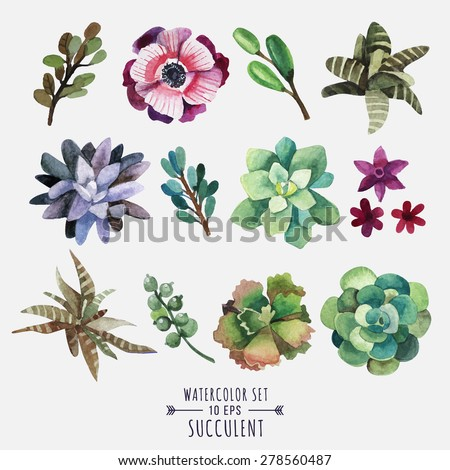 Vector set of floral elements in a watercolor style. Succulents painted in watercolor. Elements for design of invitations, movie posters, fabrics and other objects. Set #1 - stock vector