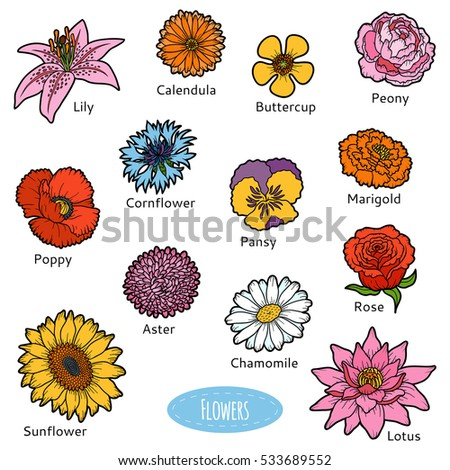 vector set of flowers  color
