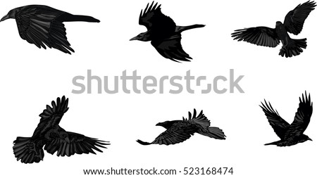 vector set of flying crows