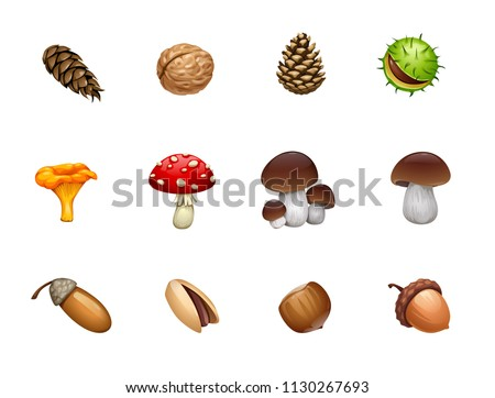 vector set of forest mushroom nut acorn cones