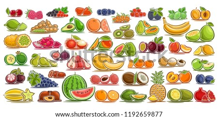vector set of fresh fruits  49