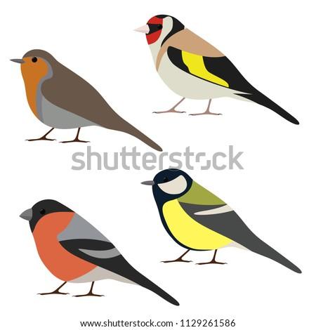 vector set of garden bird