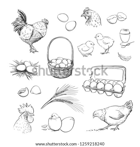 Vector set of hand drawings of hens and eggs. Sketches on a white background