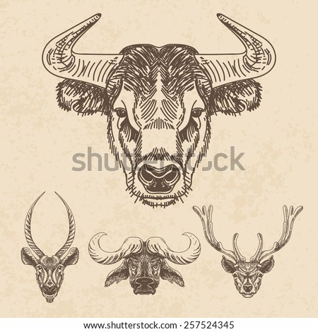vector set of hand drawn animal....