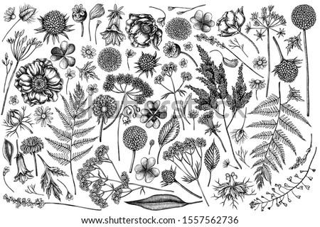 vector set of hand drawn black