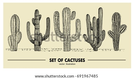 vector set of hand drawn cactus....