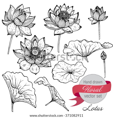 Vector set of hand drawn lotus flowers and leaves. Sketch floral botany collection in graphic black and white style