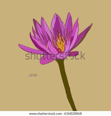 vector set of hand drawn lotus