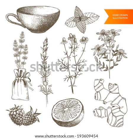 Vector set of hand drawn medical herbs and plants isolated on white Tea elements collection