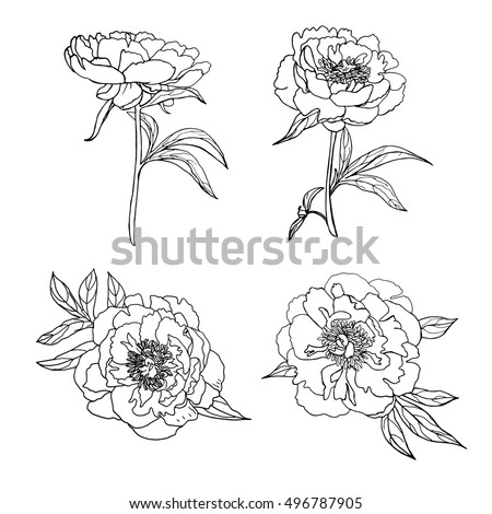 Vector set of hand drawn peonies and leaves isolated on white background. Outline flowers are element for design. Hand-drawn contour lines.