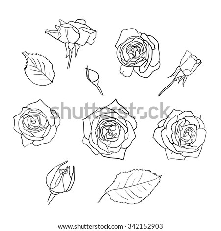 Vector set of hand drawn roses and leaves isolated on white background