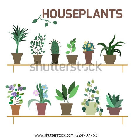 vector set of indoor plants in