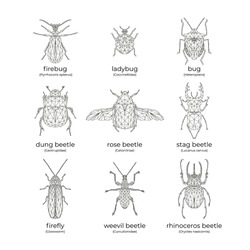 Vector set of insects: bugs and beetles in low poly style. Isolated illustration on white background. Firebug, ladybug, bug, dung-beetle, rose beetle, stag beetle, firefly, weevil, rhinoceros beetle.