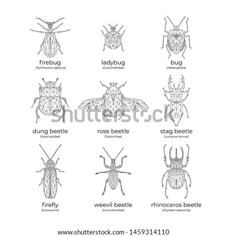 vector set of insects  bugs and