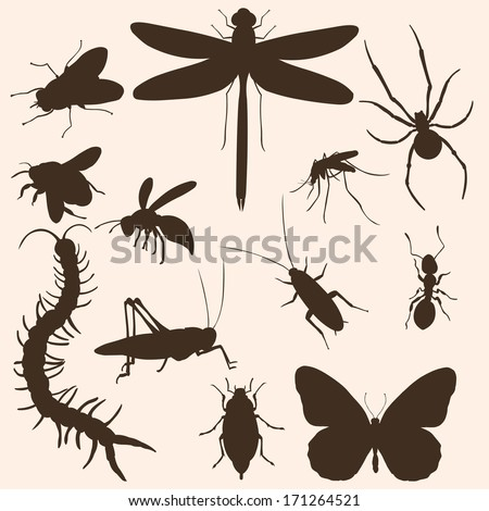 vector set of  insects