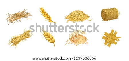 vector set of isolated images of grain crops and ears of hay and straw weaving in a rustic style