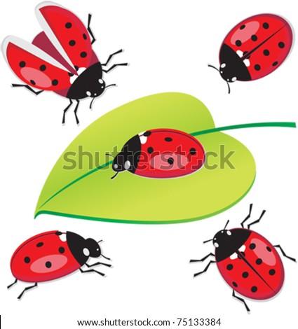 Vector set of 5 ladybug