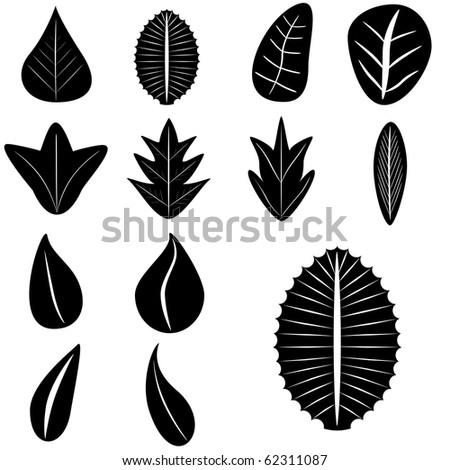 VECTOR - Set of Leaves