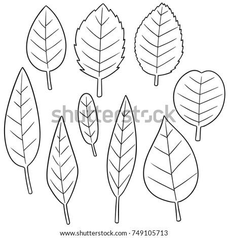 Shutterstock vector set of leaves