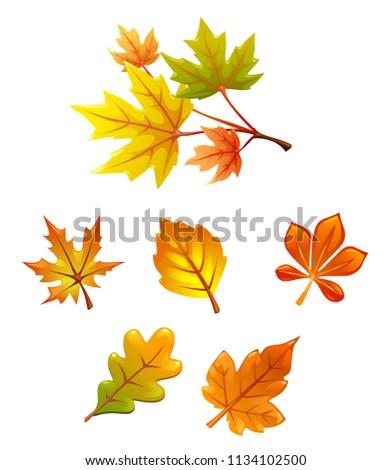 vector set of leaves. falling leaves. autumn, herbarium, yellow, maple leaf, oak leaf, branch.