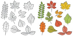 Vector set of leaves of different trees in the contour. Handmade decorative elements on a white background. Color isolated illustration.