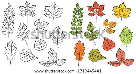vector set of leaves of