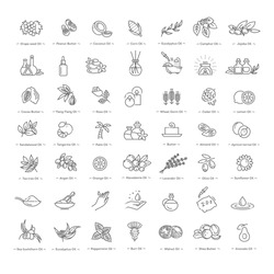 Vector set of natural ingredients and oils for cosmetics in linear style