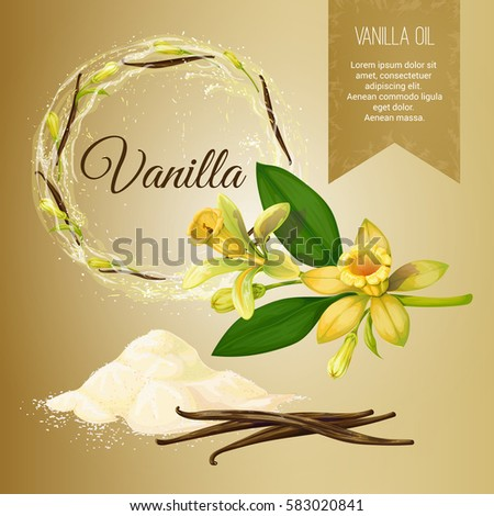 Vector set of objects on the theme of vanilla and its application. Vanilla powder. Seasoning. Frame and Label. Achieved in a realistic stile. Objects isolated
