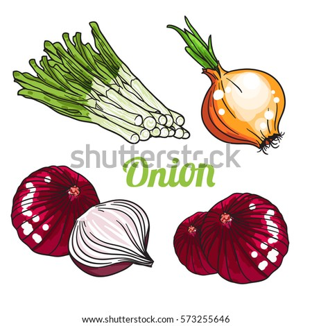 Vector set of orange green and purple onion. Isolated on white background.