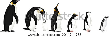 vector set of penguins